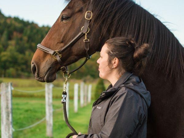 cheval regarde au loin veterinaire osteopathie trois-rivières