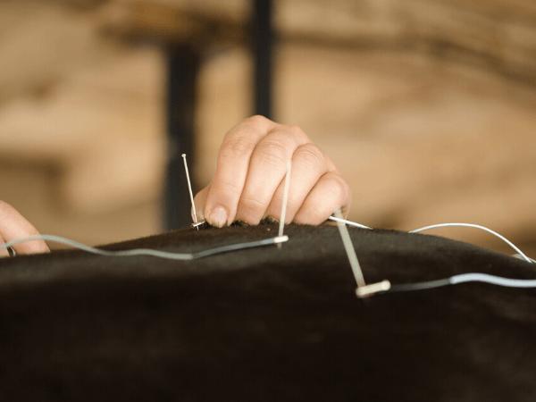 traitement acupuncture cheval trois-rivieres
